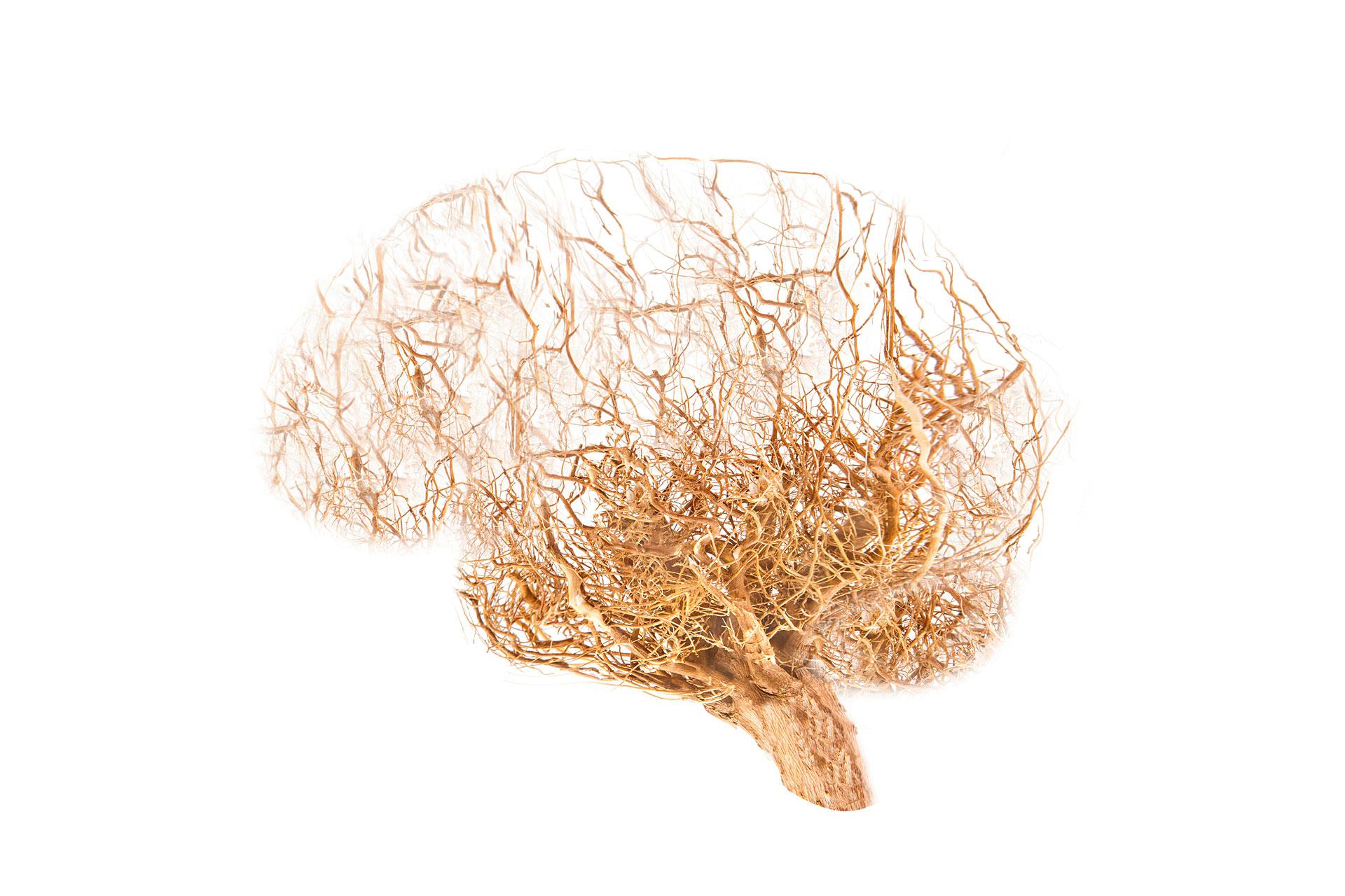 Centros Clic - cerebro raices